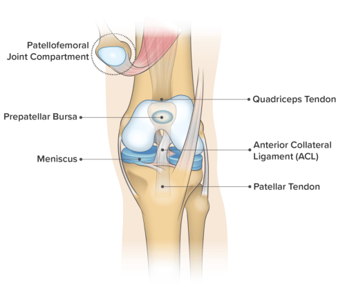 small resolution of knee anatomy frontal view