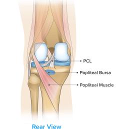 symptom knee pain on the back of the knee  [ 3899 x 4327 Pixel ]