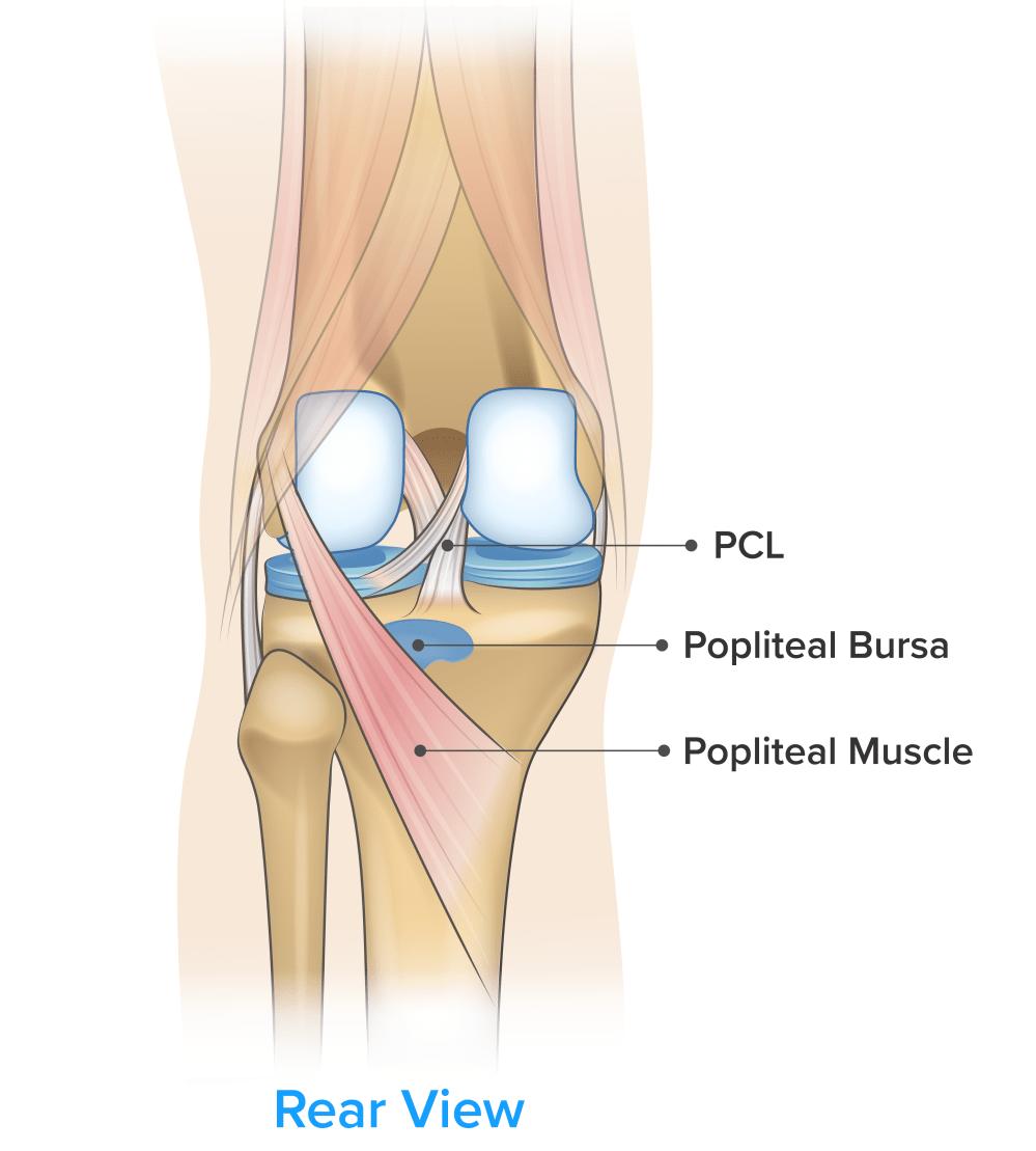 medium resolution of symptom knee pain on the back of the knee