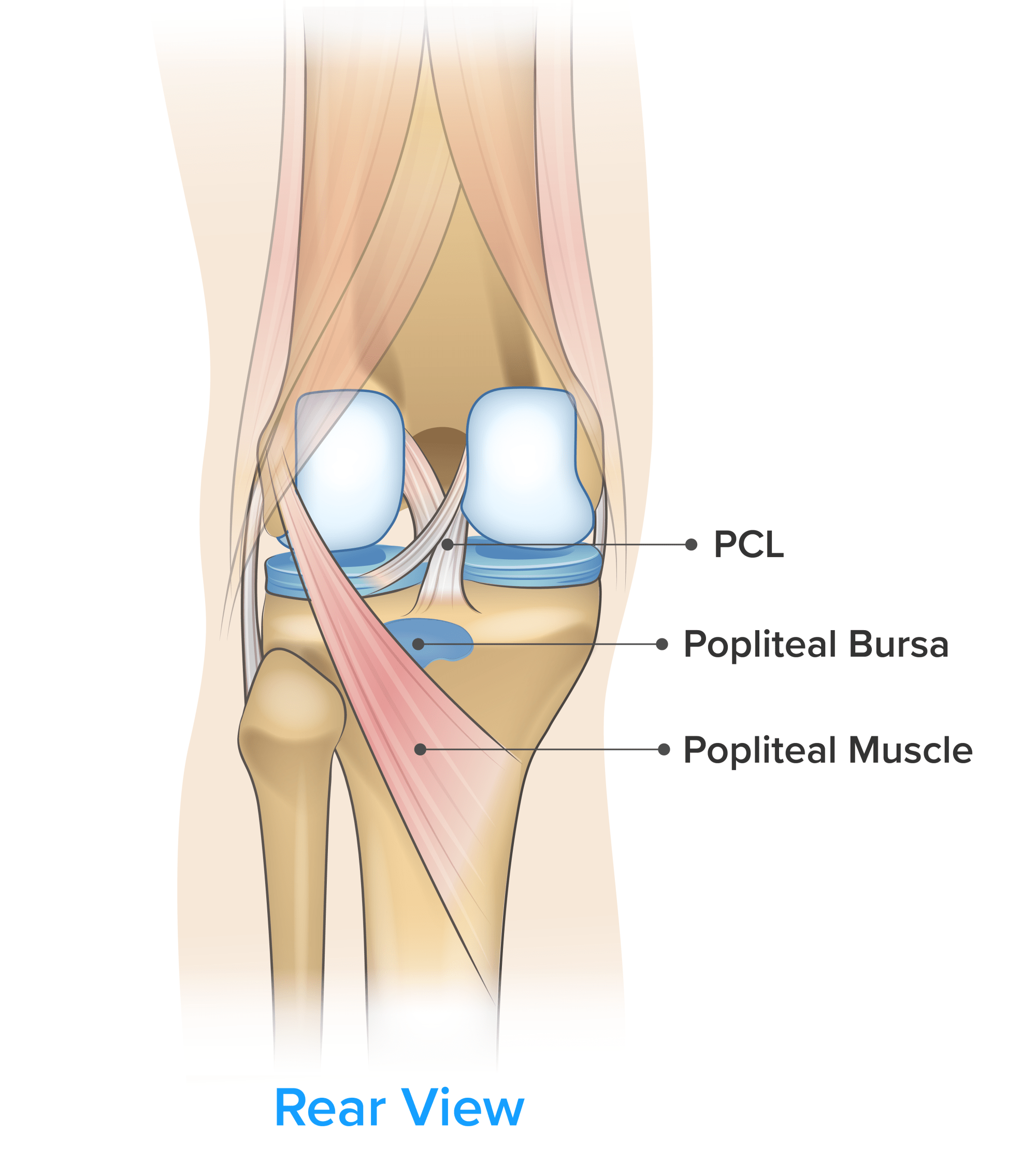 hight resolution of symptom knee pain on the back of the knee