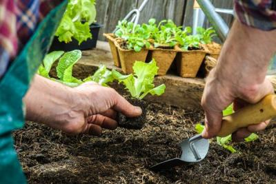 Learn to Garden Workshop