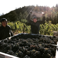 Behrens Family Winery - Harvest workers