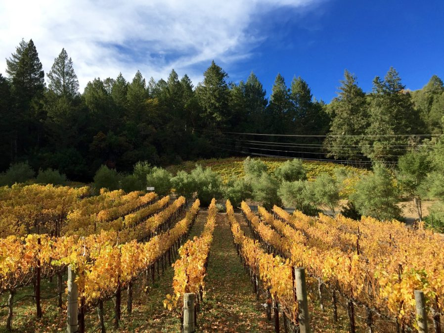 Eeden vineyards in fall