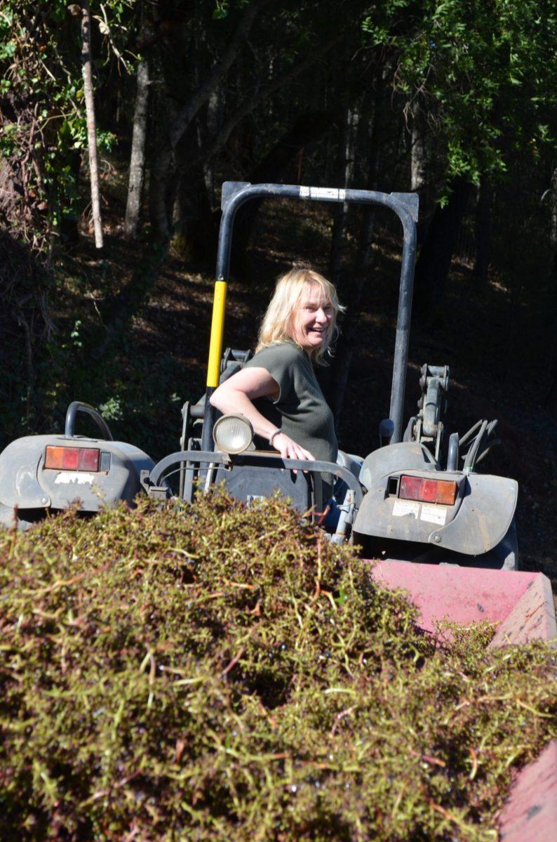 Keenan Winery Harvest