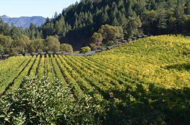 Keenan Winery Vineyard