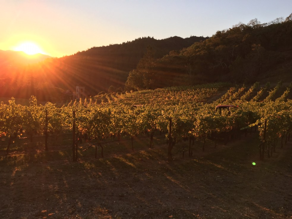 Marston Family Vineyard sunset