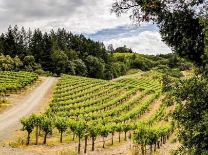Schweiger Winery - Driveway and Vineyards
