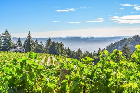 Schweiger Winery - View from Chardonnay vineyard