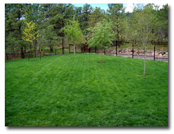 Lawn Maintainance by Colorado Stoneworks Landscaping