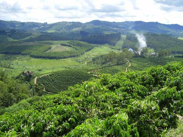 Brazil coffee farm