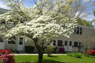 Trees surround apartment buildings