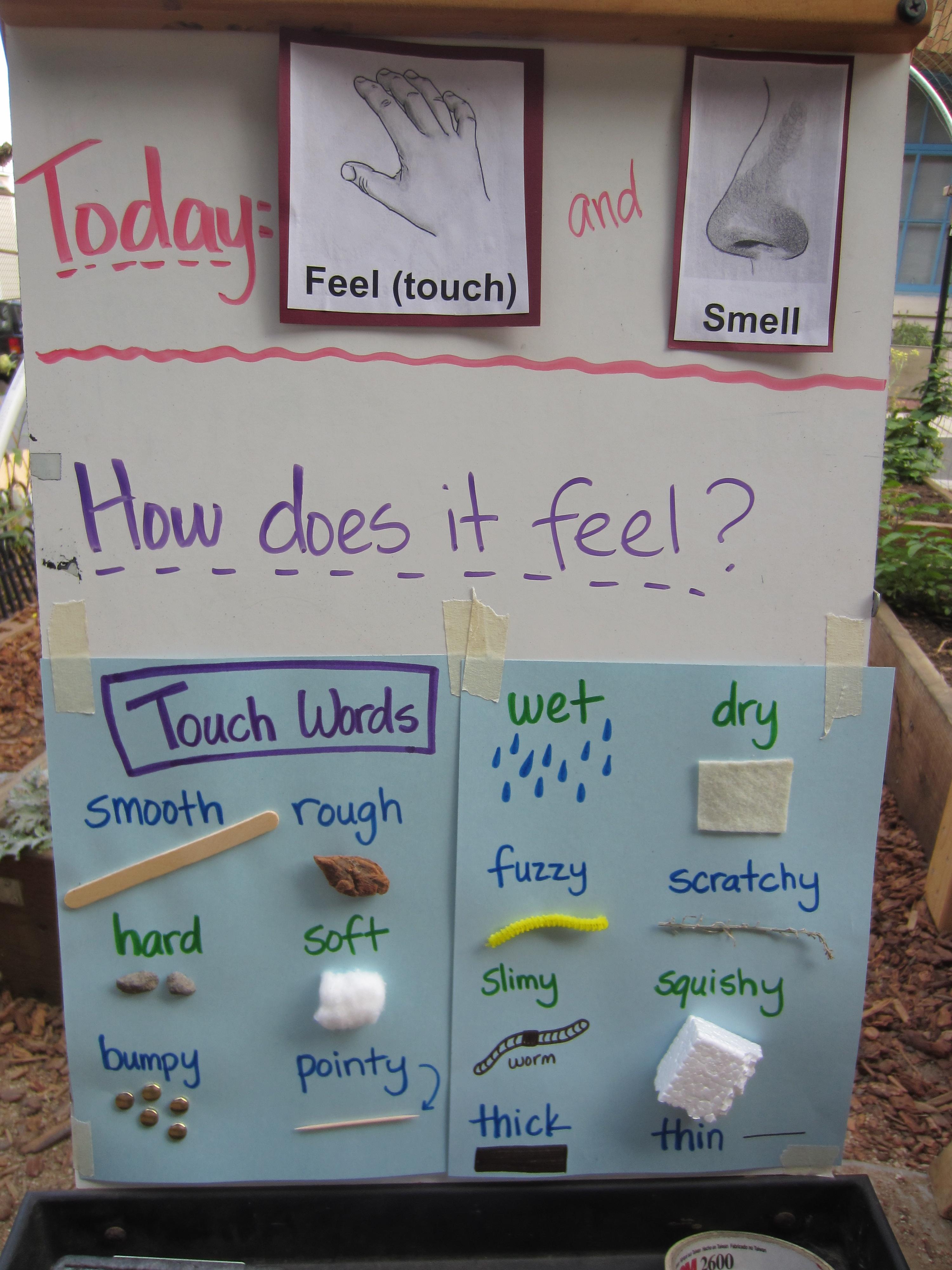 Words To Describe The 5 Senses Descriptive Language