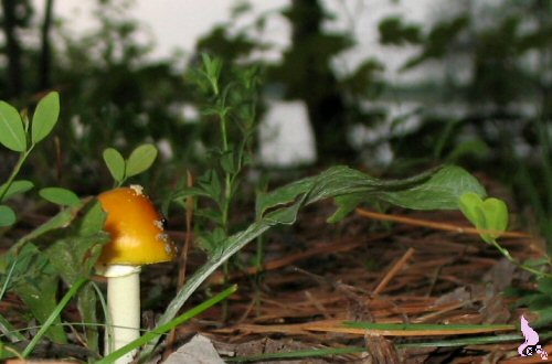 August 2010 by Springwolf © Mushrooms Are Faery Stools Left By Magik Dust
