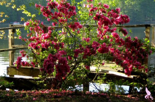 April 2012 by Springwolf © Spring Time Is In Bloom