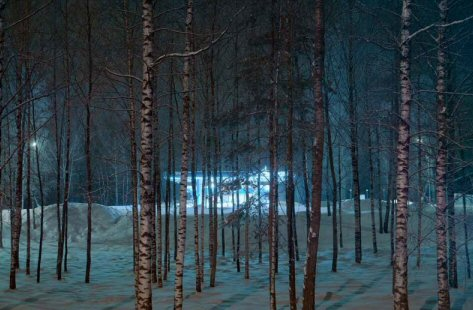 Time to rest your weary branches by Dmitry Savin/Getty