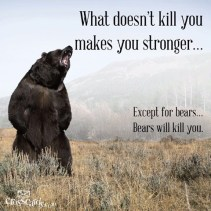 Bears-Kill-you