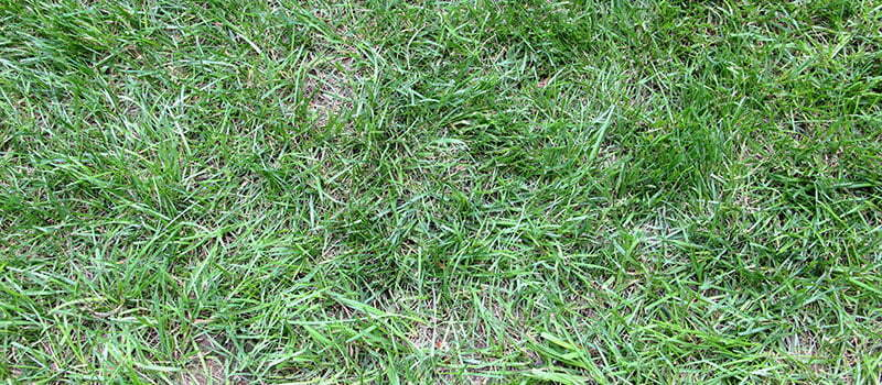 Help! Why Is My Lawn So Patchy?