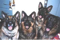 Baron, Tala, Rex & Bruno
