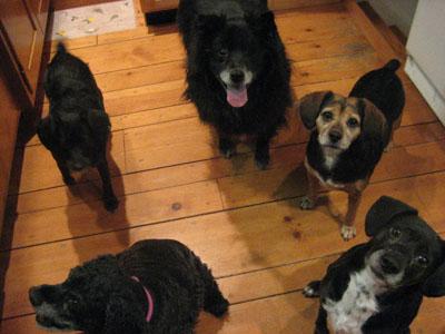 puppy doggies