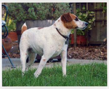 DOGS_256-Pep