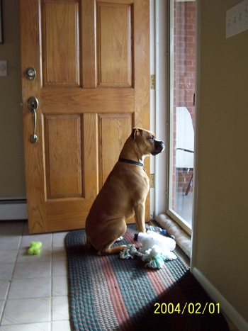 DOGS_338-Picture_028