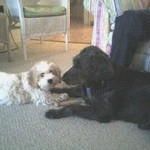 DOGS_431-Sam_and_Libby