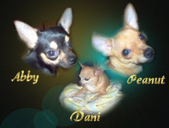 DOGS_448-MyBabies