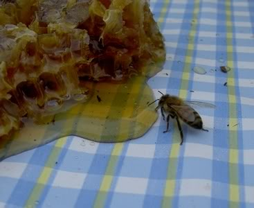 Field Trip Foto Friday: Honey Bee Farm