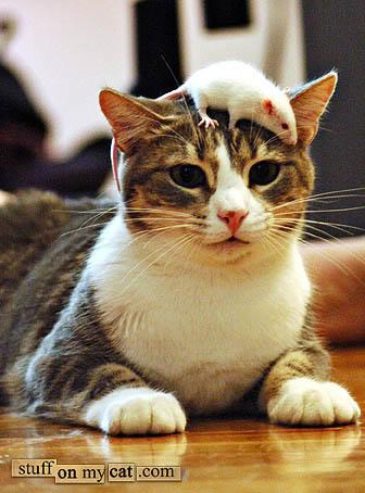 mouse-hatcat