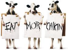 3-cows