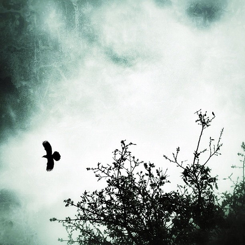 Fly Away #marchphotoaday #bird #trees #snapseed #igers #iphone4s #instagram #instagramhub #iphonetx #grunge #moody #fly #tweet #silhouette #iphoneonly #iphonedaily #picoftheday #instapic #photooftheday #sky #clouds #gang_family #jj #instamood