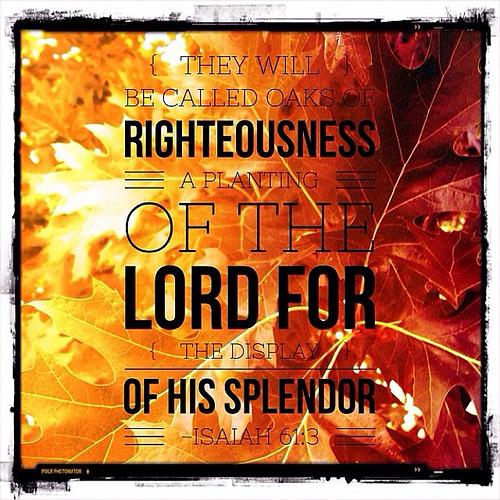 #bible #verse #christianity #inspiration #hope #fall #leaves #orange #autumn