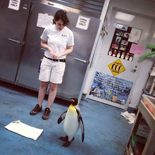 #Penguin 15 yo : 'Pikaboo' ❤️ #moodygardens #mgmediatour13