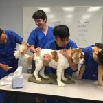 veterinary office assitant course