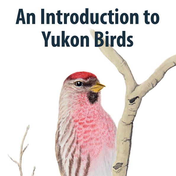 An Introduction to Yukon Birds