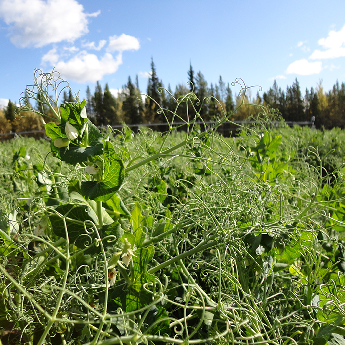 Canadian Agricultural Partnership: Programming Guide for Yukon