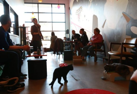 cat-cafe-purrintons-10