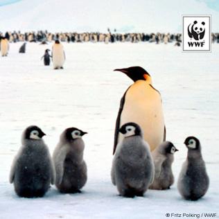 wwf_penguins