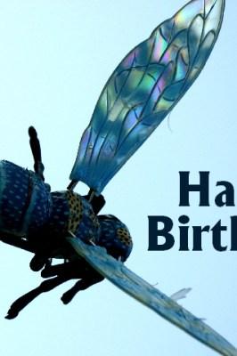 lustige Sprüche und Bilder zum Geburtstag, Glück