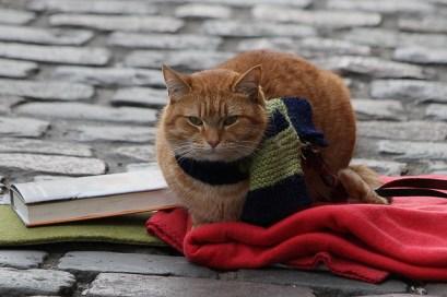 a-street-cat-named-bob-scarf