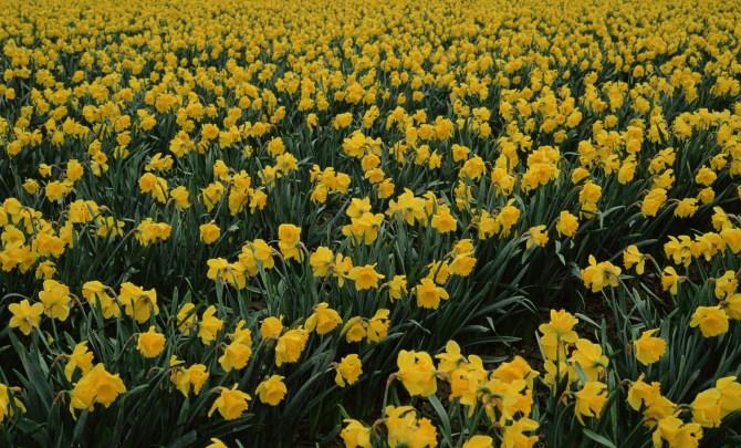 healing_bloom_flower_garden