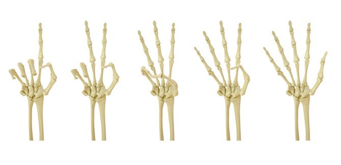 bone-health-quiz-stats-info-skeleton-osteoporosis-osteopenia-spry