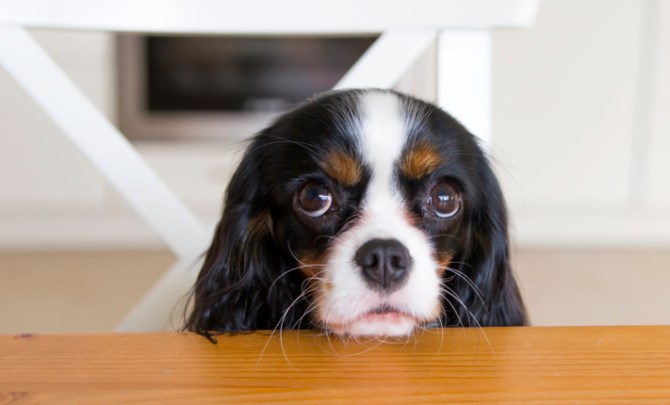 surprising foods that can kill your pet
