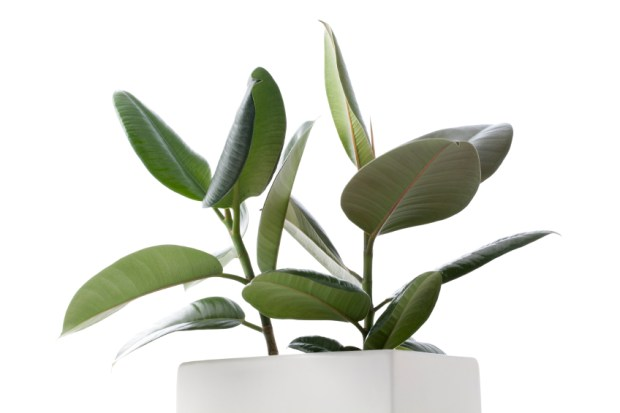 Beating Cold-Weather Blues: 10 Houseplants to Cheer You Up | spryliving.com