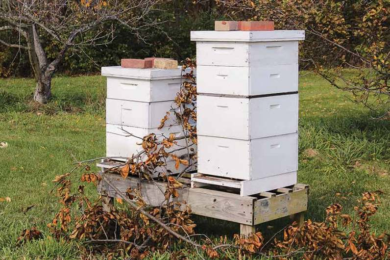 White Violet Center maintains a small number of beehives and sells honey and lip balm made with beeswax. Bees are a vital part of the organic garden and pesticide-free gardens are vital to the bee population.