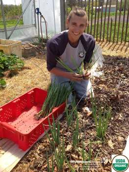 AmeriCorps volunteer Brandon happily harvests green onions.