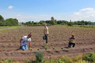 Brandon, Claire and Jackie hard at work among baby pepper plants