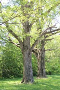 During Labor Day, Sister Donna Butler thought about many things, including the trees.