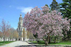 spring-blog-pic