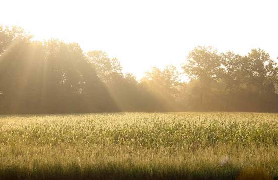 Early morning sun on on a field at Saint Mary-of-the-Woods.